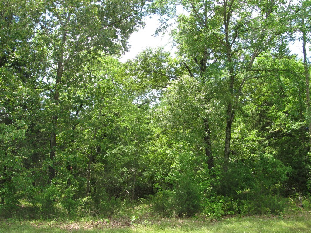 WOODED LOT FOR SALE EAST TX   LOT IN WILDLIFE PARK LARUE TX