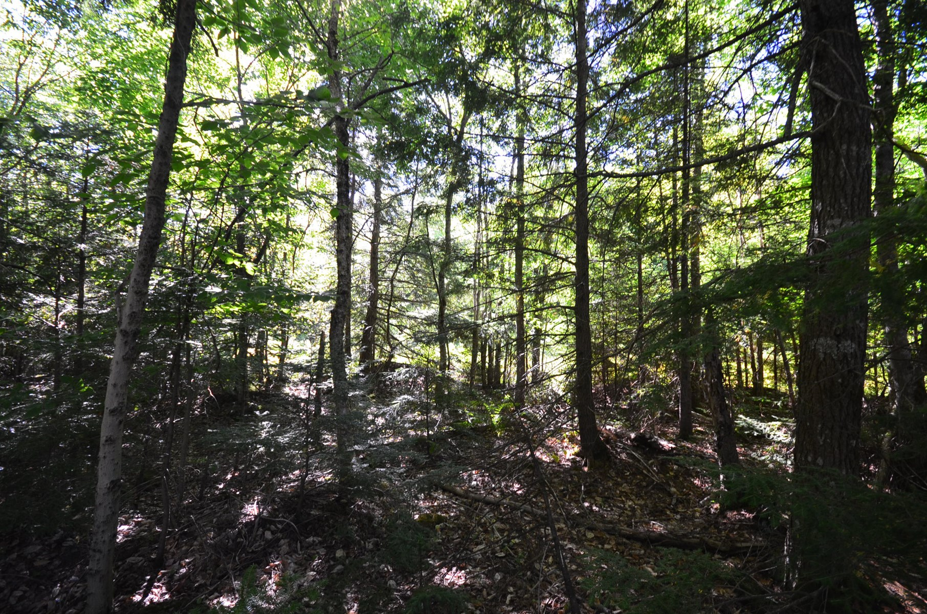 Maine Land for Sale in Mattawkeag