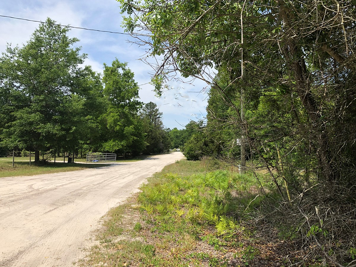 .98 ACRES FOR SALE IN SPRING HILLS S/D.