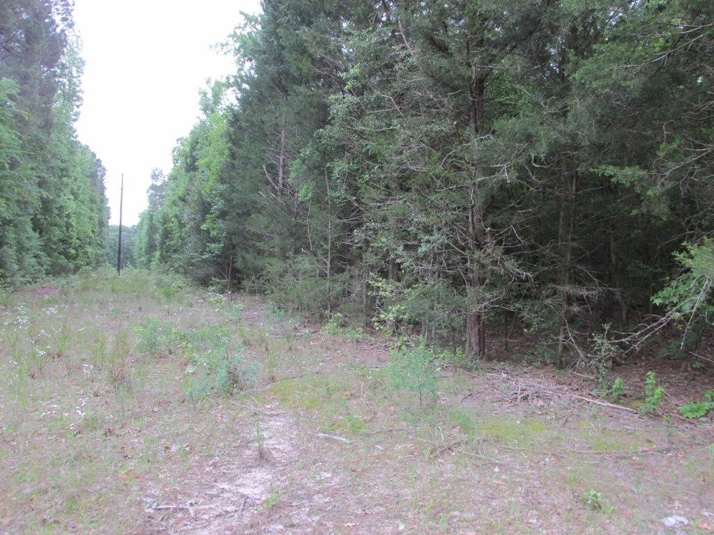 LAND FOR SALE NEAR ELKHART TEXAS WITH POND