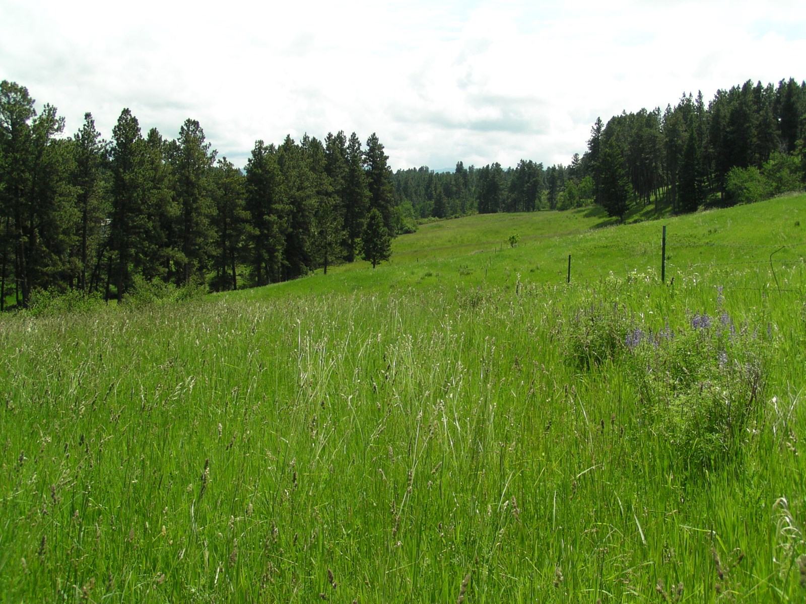 Central Montana Timbered Acreage For Sale