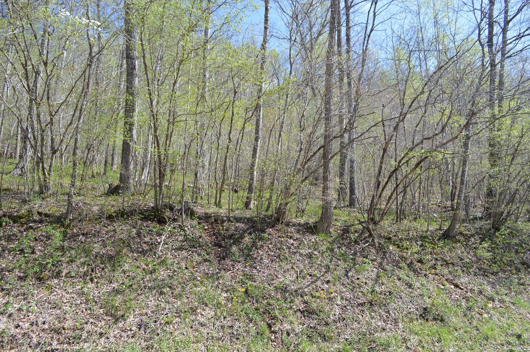 Unrestricted Wooded Lot for Sale in Alleghany Co NC
