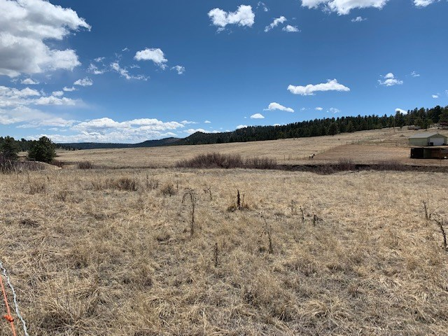 Land with Stream in Florissant CO