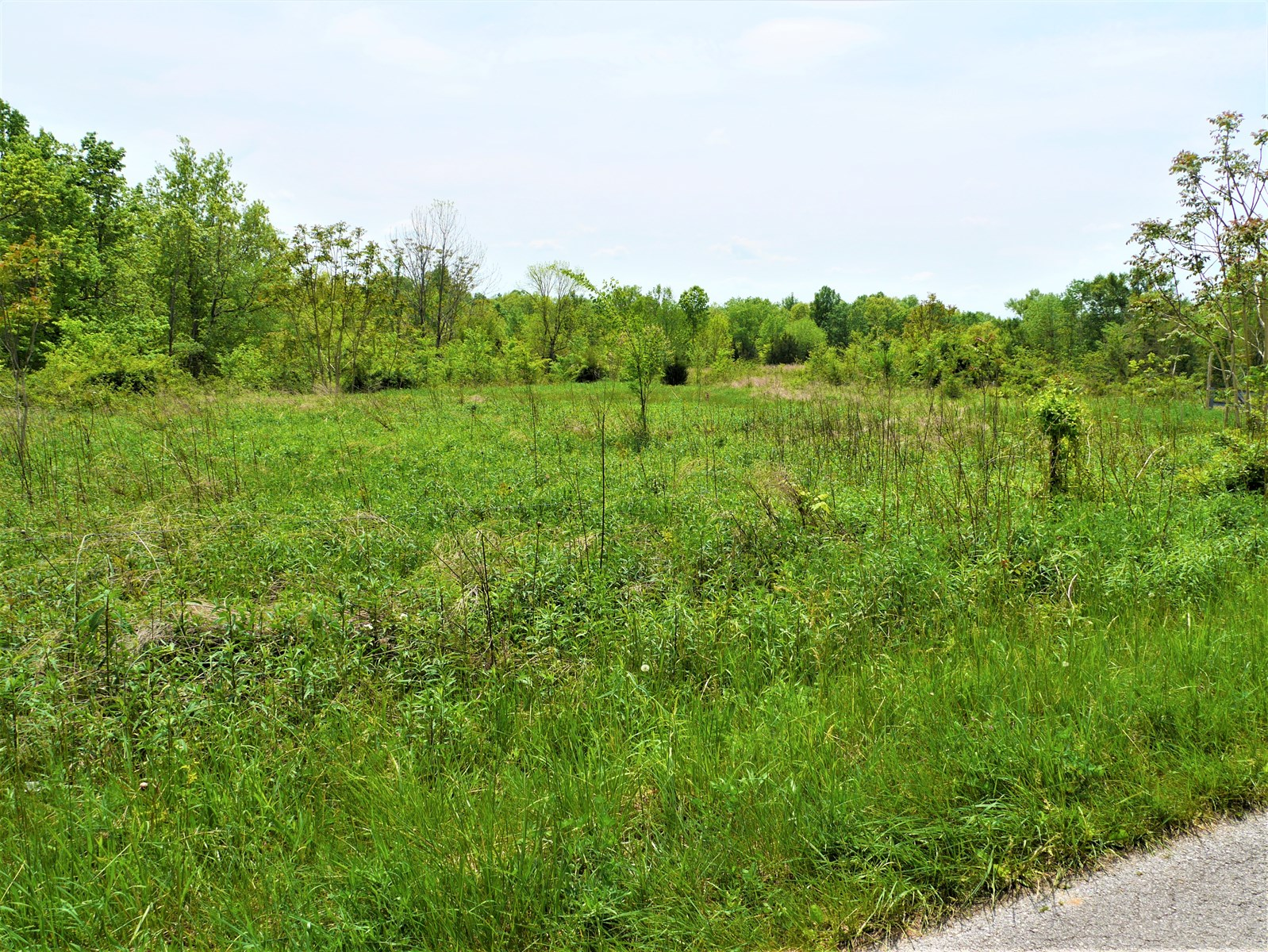 Hunting, Level Building Site, Pasture & Woods, Utilities