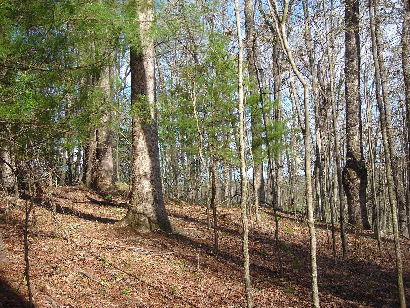 Wooded Lot for Sale with views of the New River