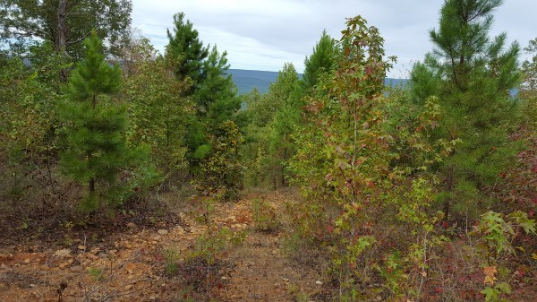 KIAMICHI MTN HUNTING LAND – 80 ACRES FOR SALE OKLAHOMA