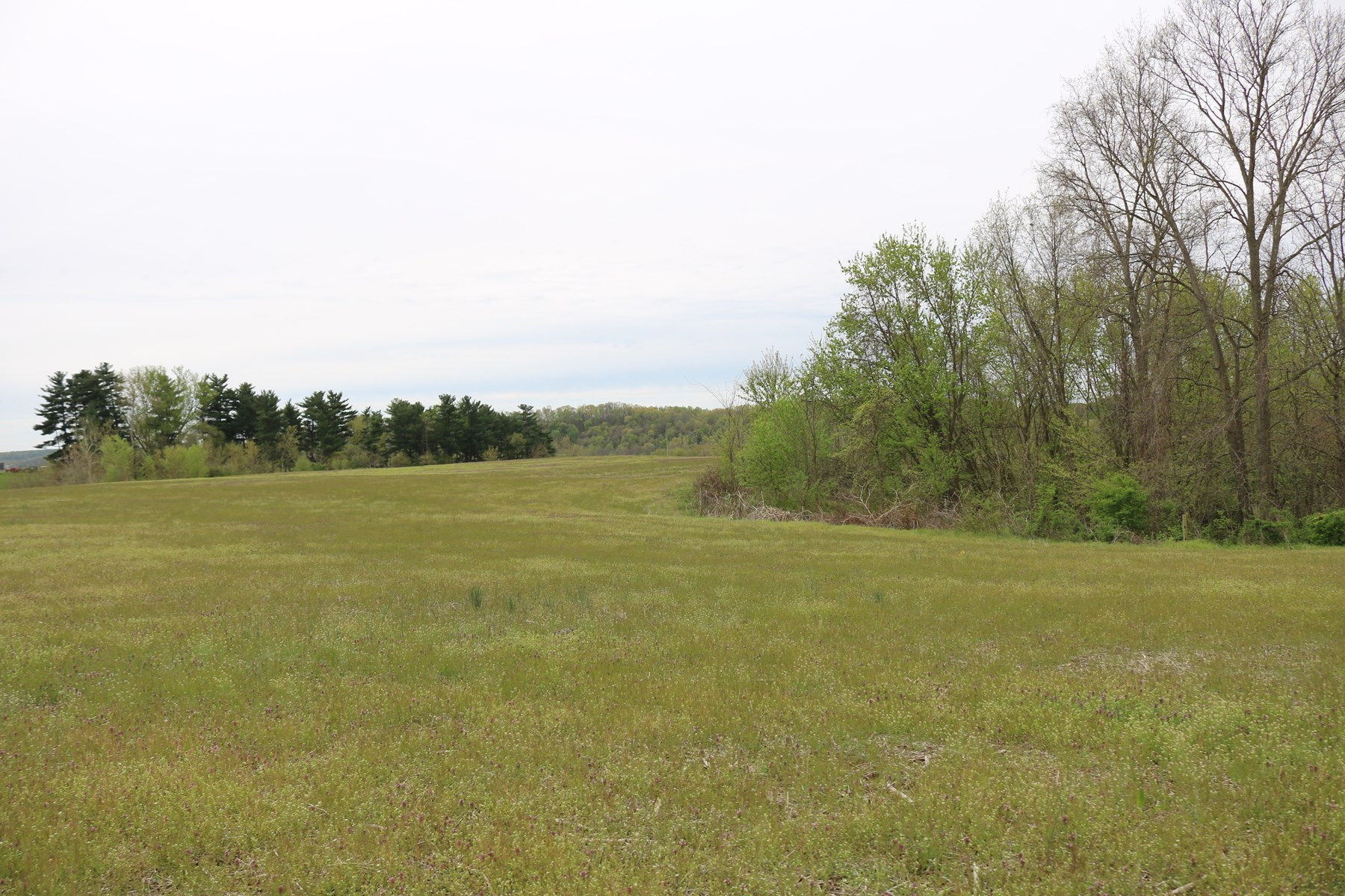 Tract 8 | 65 +/- Acres | Tillable/Wooded