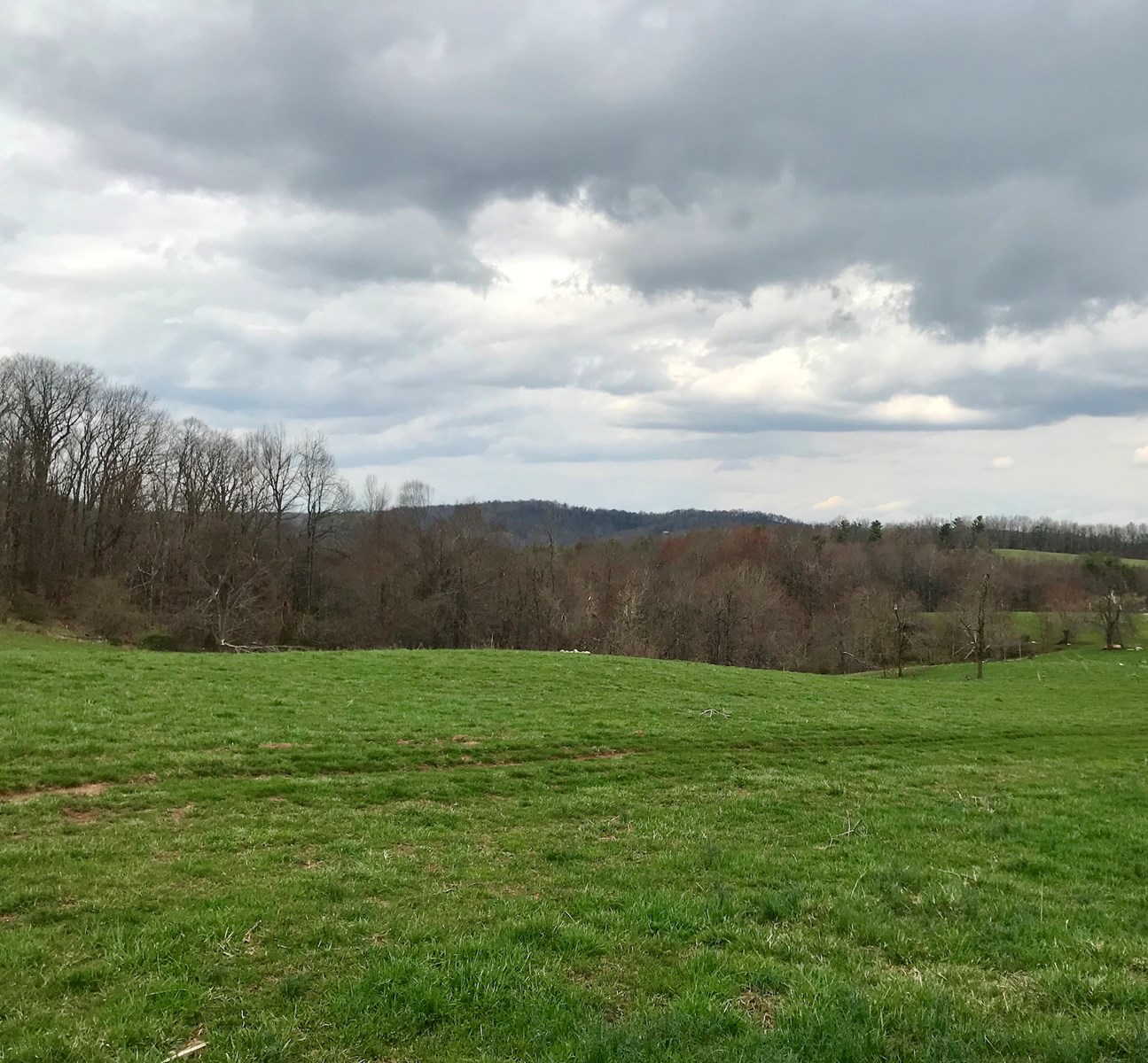 Gorgeous Land Property for Sale in Floyd VA!