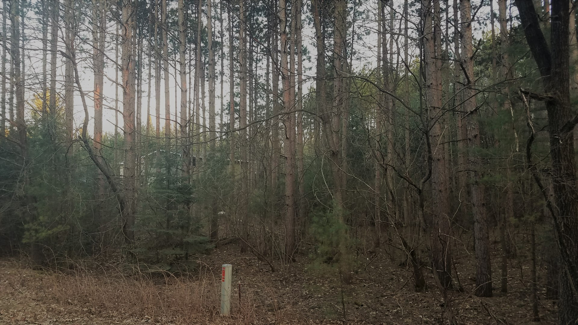 Wooded Lot near Hartman Creek State Park for sale Waupaca WI