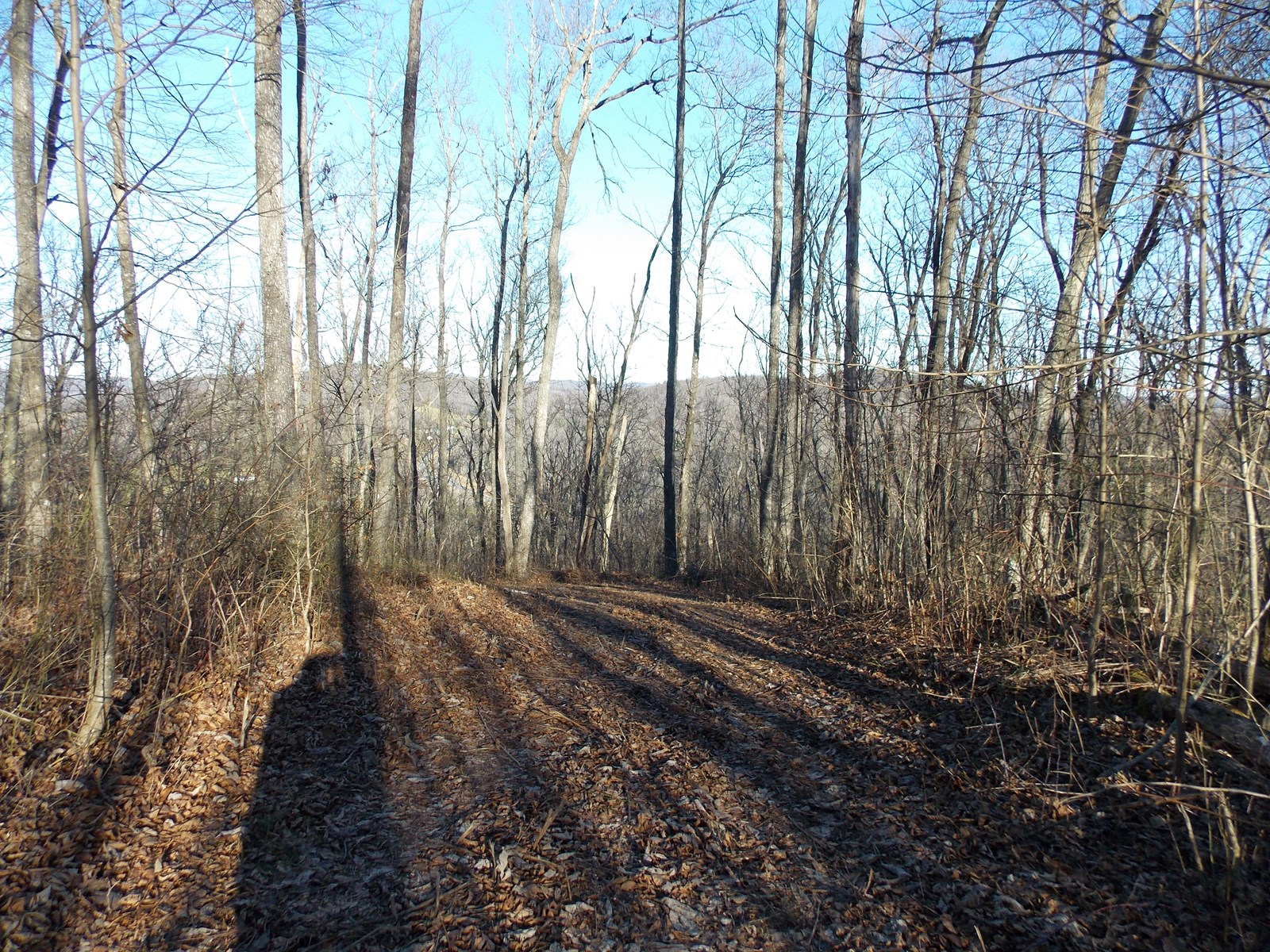Wooded Land for Sale on the Floyd VA
