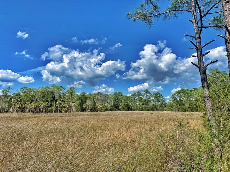 GORGEOUS GULF VIEW PROPERTY - Cedar Key Florida