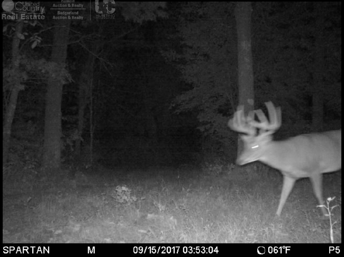 Trophy Whitetail Sleeper For Sale In Adams County, Wi