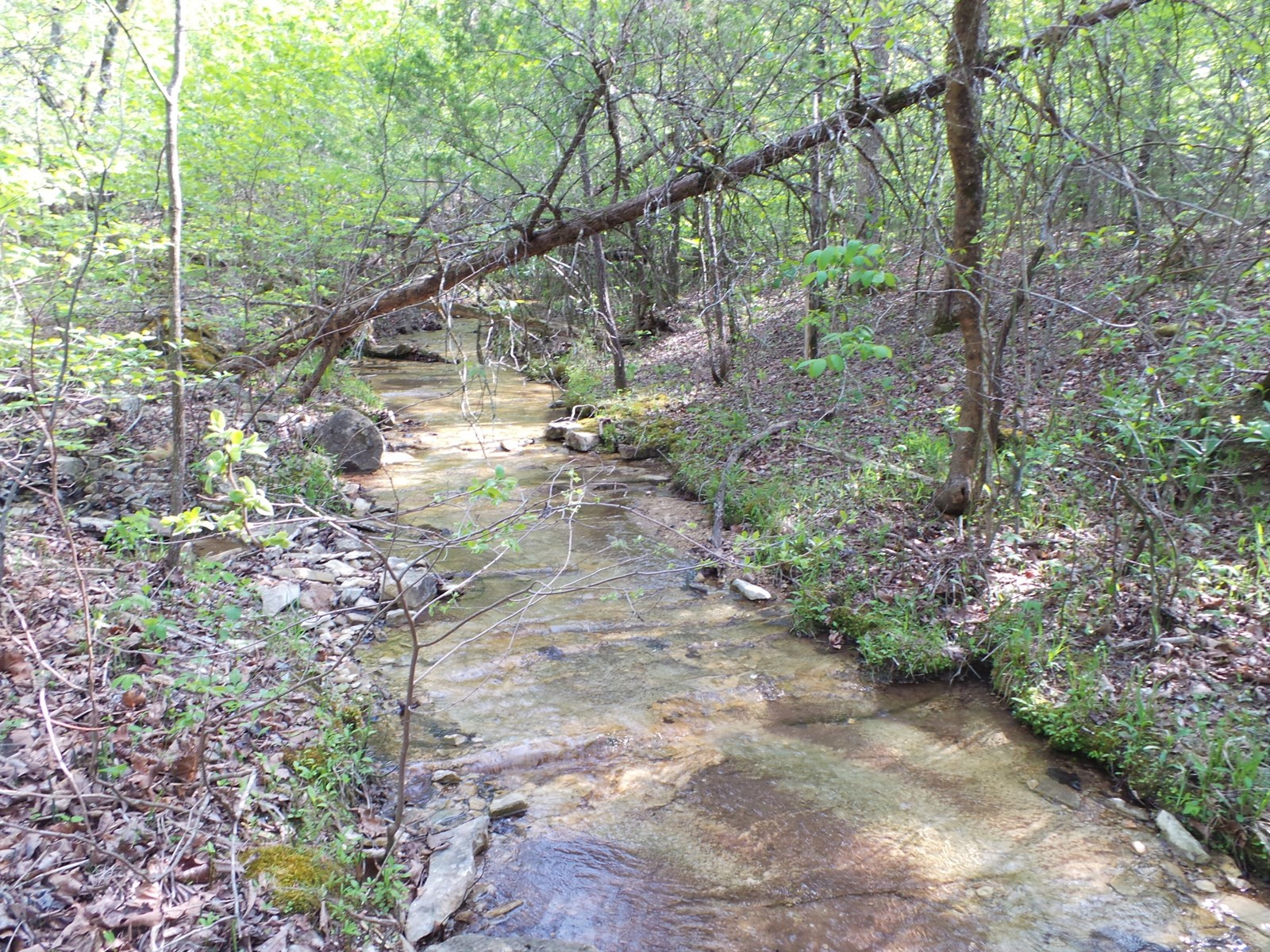 Land for Sale in Yellville, AR  72687