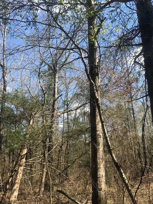 Land for Sale - Drain Rd, Weir, MS 39772 - 44.5 Acres