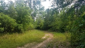 HUNTING LAND IN UNION PARISH FOR SALE