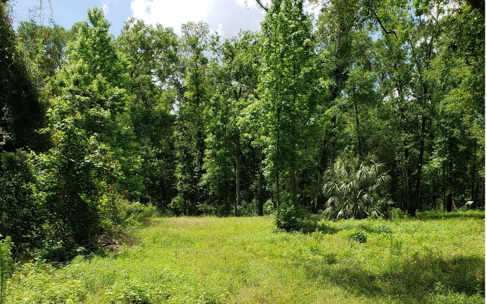 Absolutely beautiful 5.2 acres with underbrush cleared.