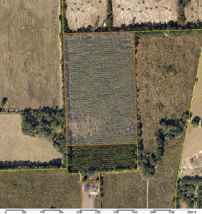 35 ACRES OF PLANTED PINES IN LAKE CITY, FLORIDA
