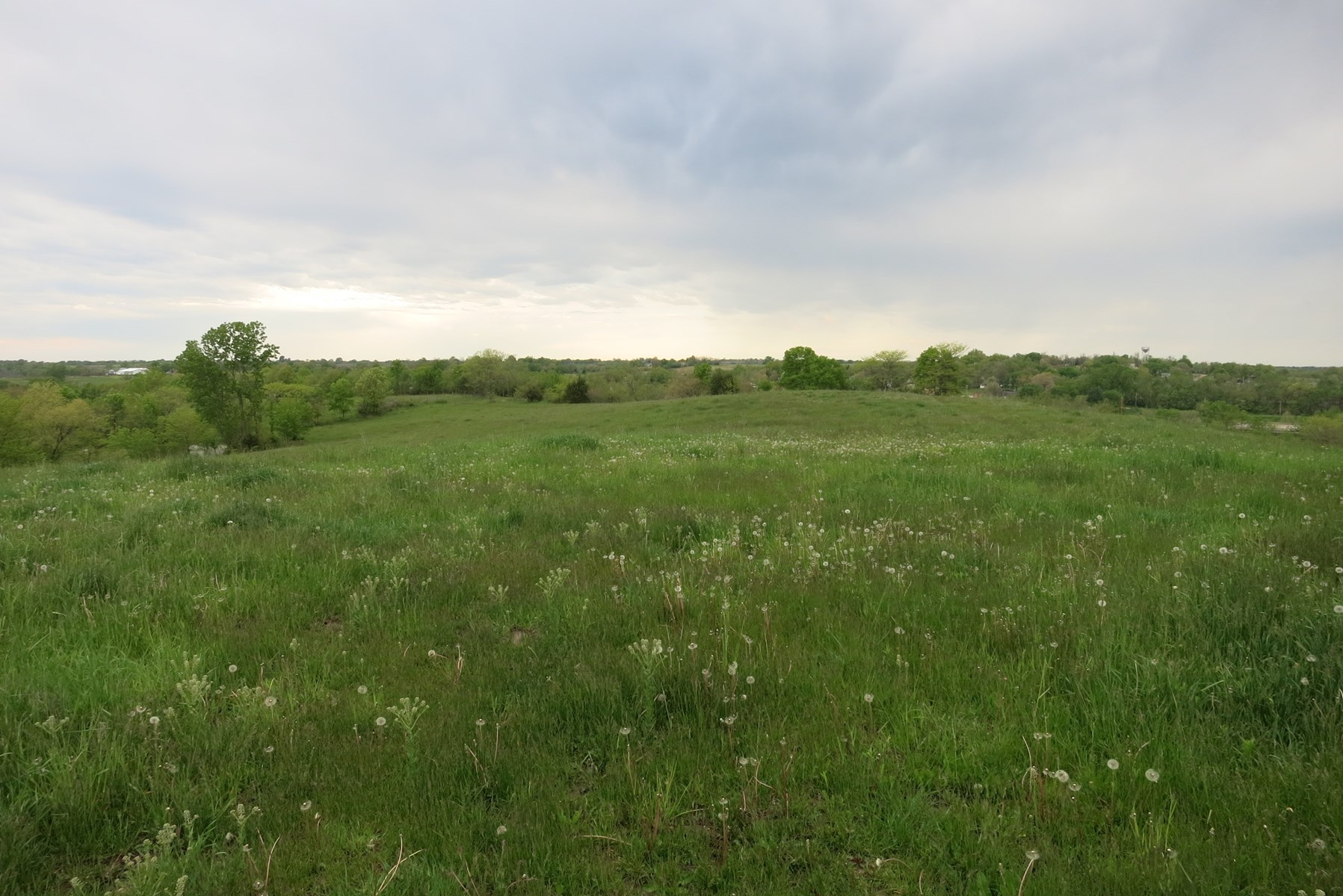 Grass Farm for Cattle Grazing or Hay Ground