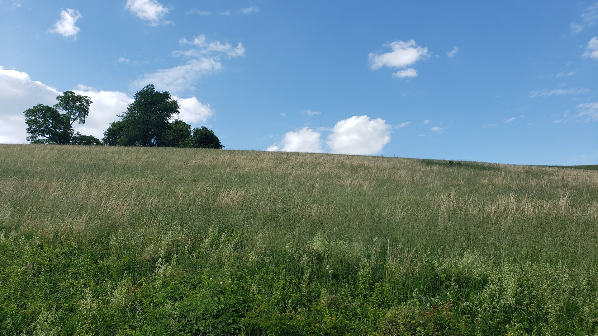30.49 Acres of Beautiful, Lush Country Land!