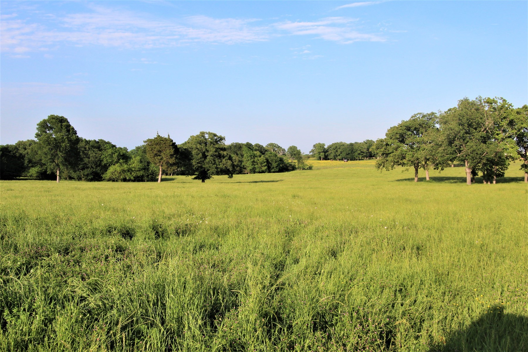 Texas Cattle Ranch And Hunting Land For Sale
