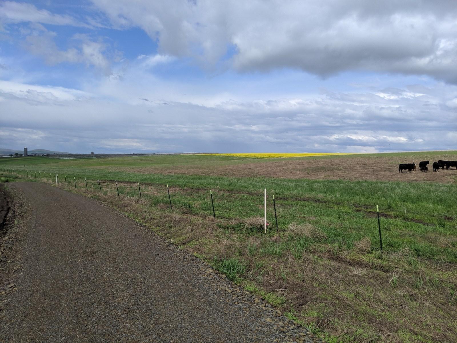 12 Acre Building lot for sale No CCR's Grangeville, Idaho