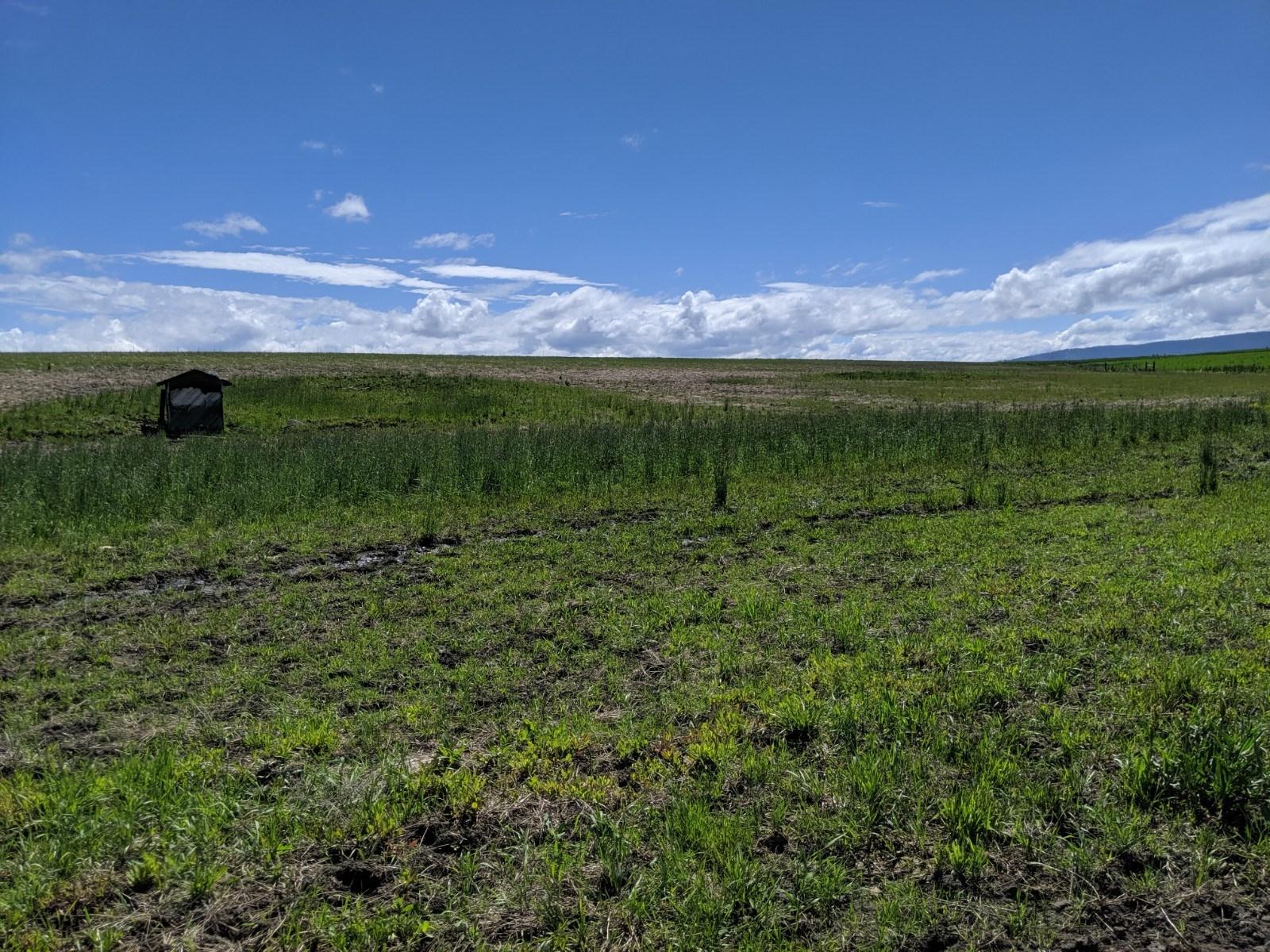 6 Acre Building lot for sale No CCR's Grangeville, Idaho