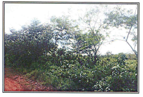 COUNTRY LOT FOR SALE IN LA PINTADA PANAMA, Land for sale