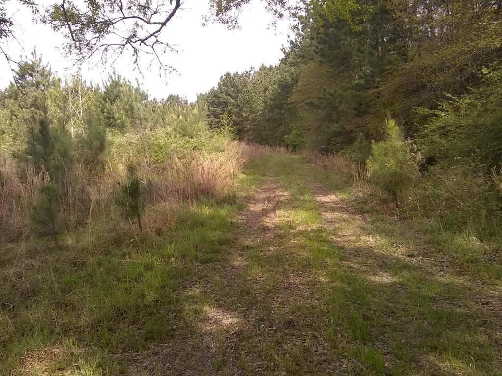 Hunting Land Joins Homochitto National Forest Mississippi