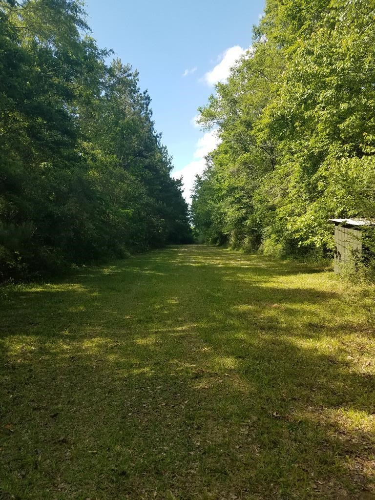 Timber Property Hunting Property Walthall County Mississippi