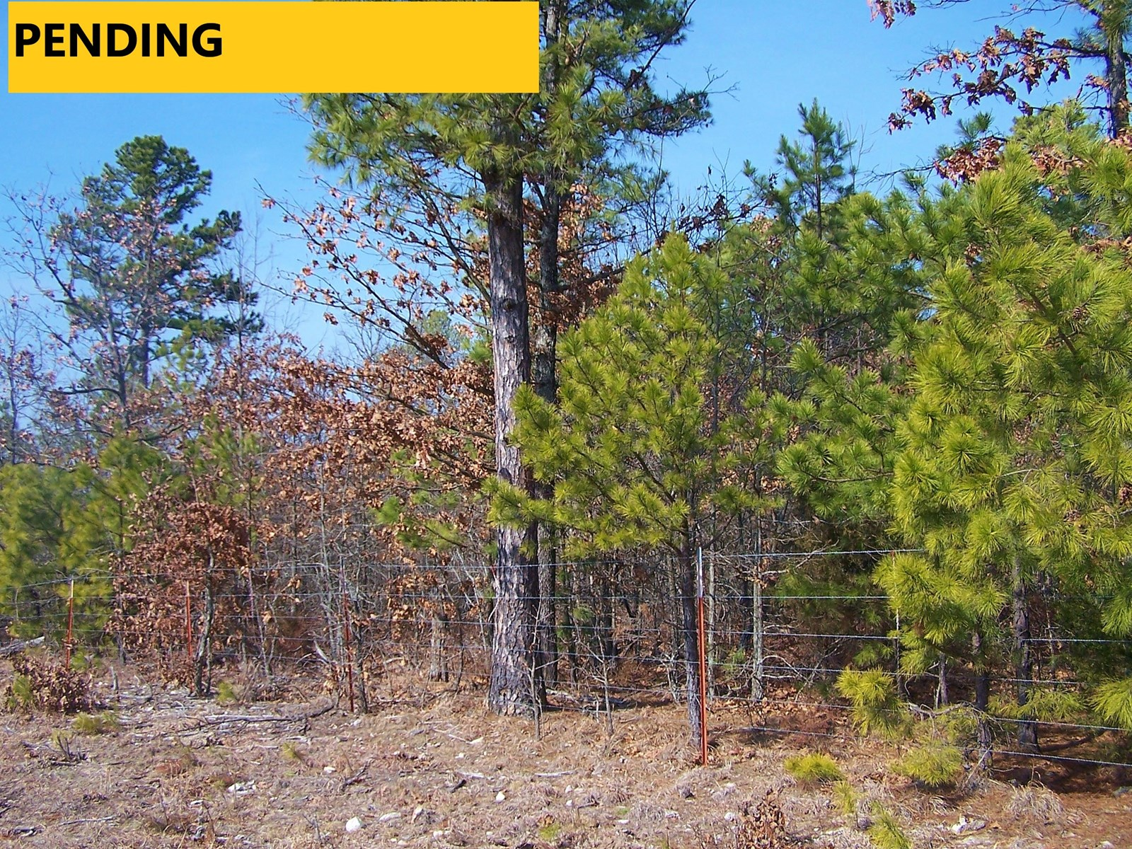 LAND FOR SALE IN MARION COUNTY ARKANSAS