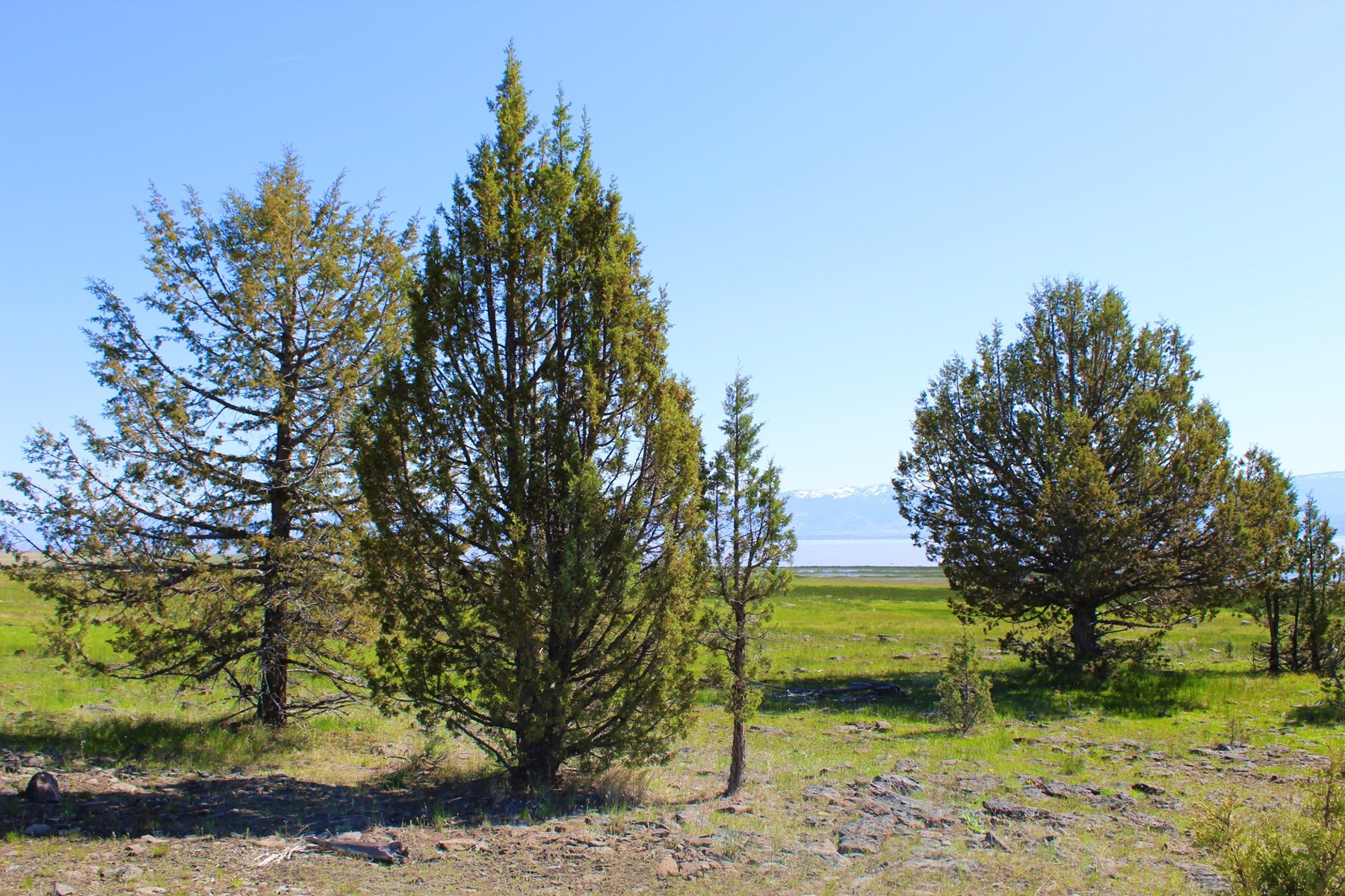133 Acres For Sale on the West Side of Goose Lake