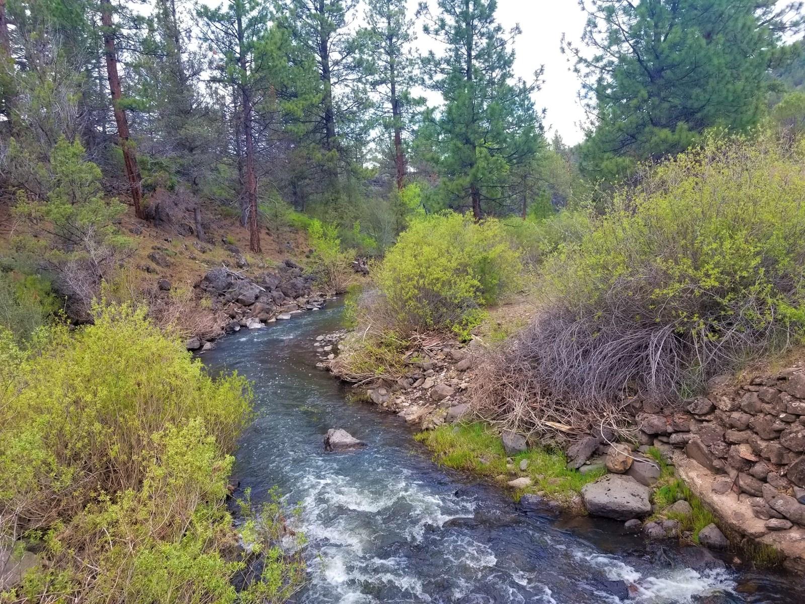 Willow Creek runs through it: 90+/- Acres