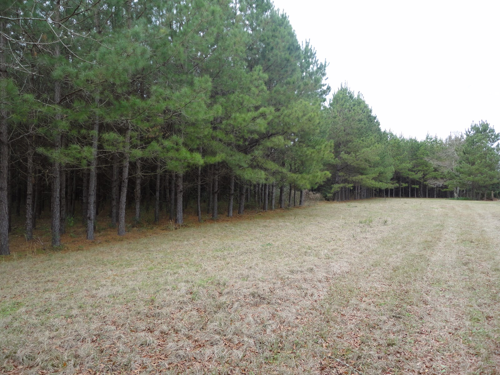 42 Acres For Sale Lincoln County Ruth Mississippi