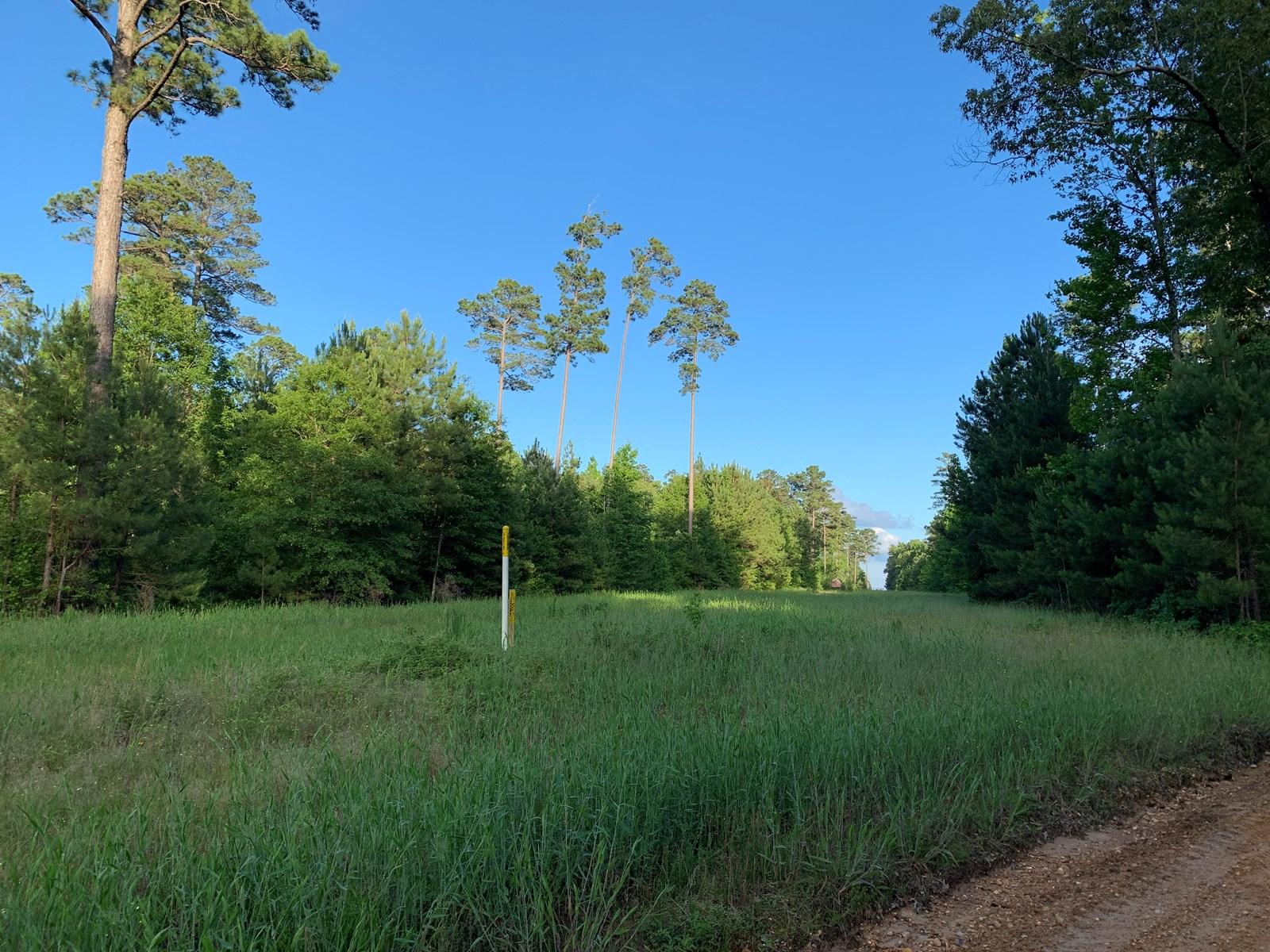 Timberland W/ Home Site Potential near Smackover, Arkansas