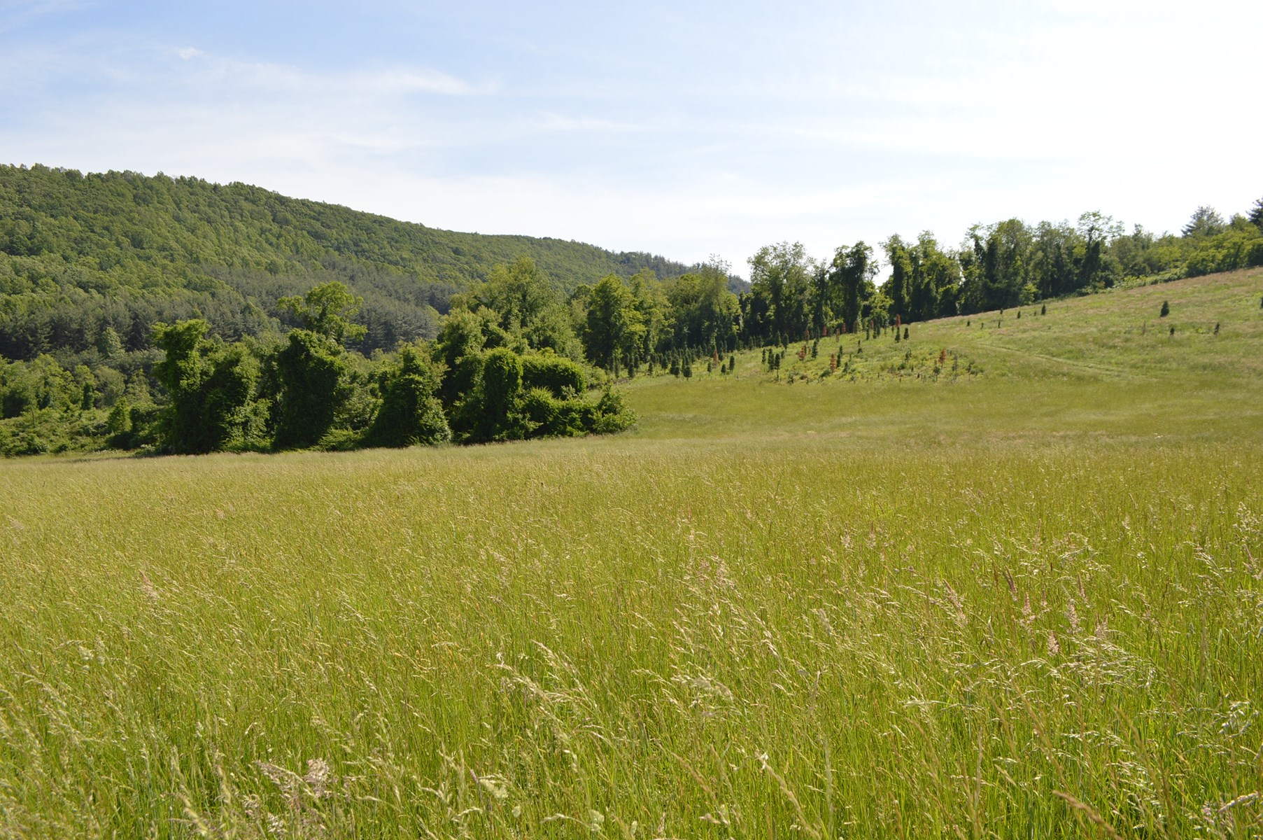 Unrestricted Land Tract for Sale in Alleghany County NC
