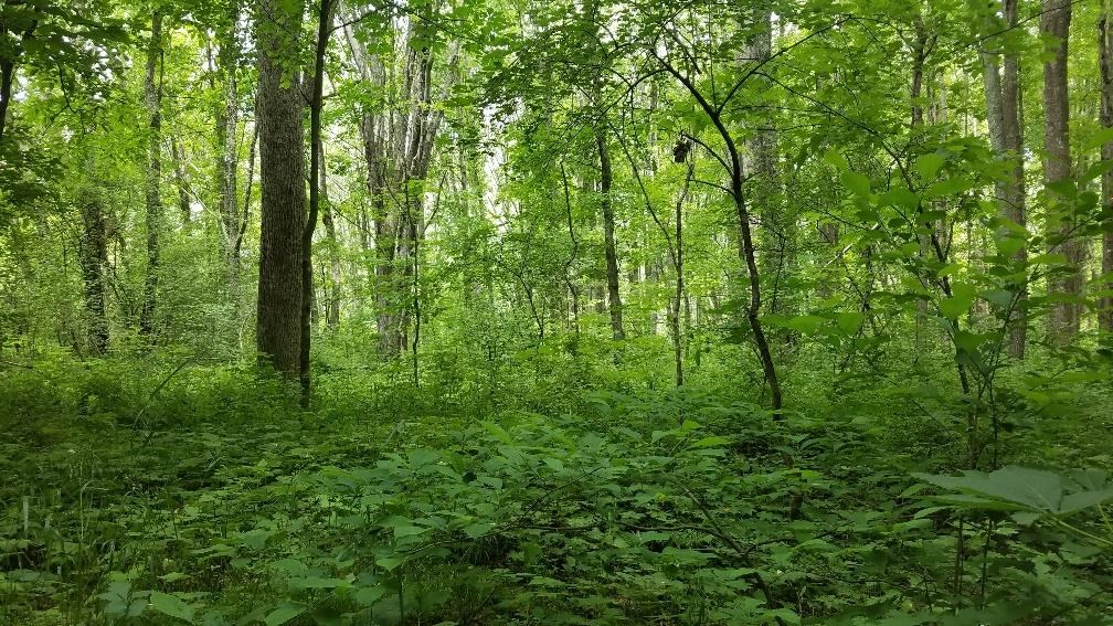 14 acres of Beautiful Wooded Land with Potential Close to460