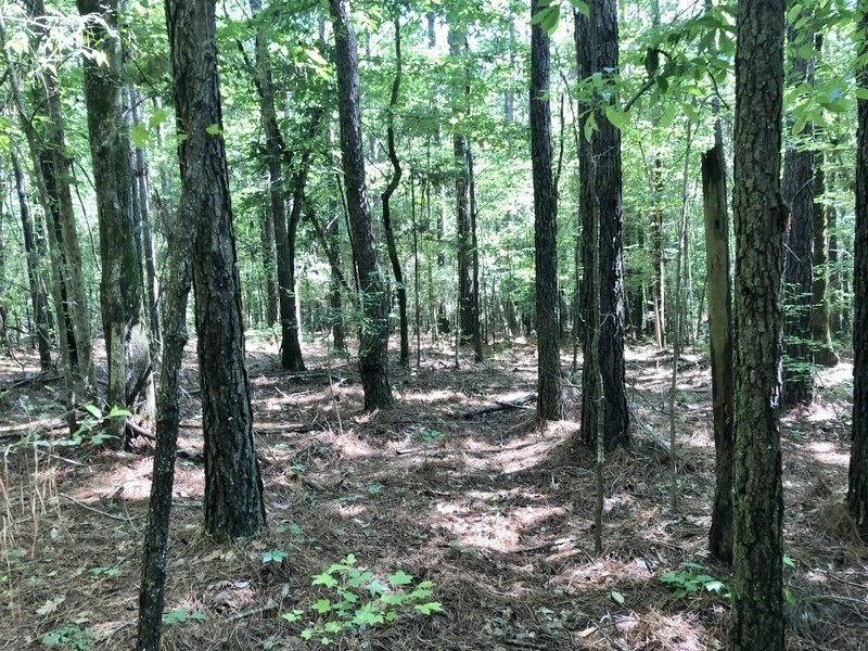 40 Acres Land for Sale Brookhaven, Lincoln County, SW MS
