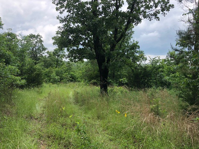 Twenty Acre Tract For Sale