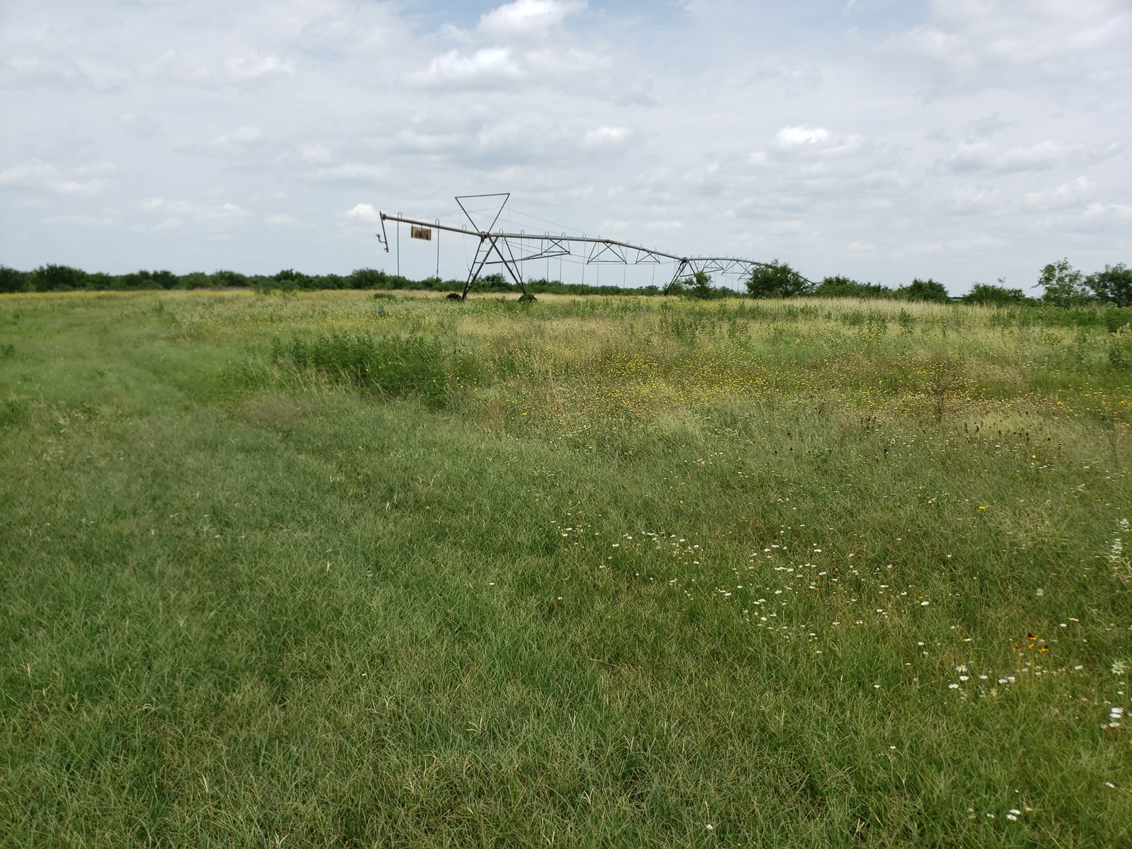 Poteet Farm for sale with acreage near San Antonio, Tx