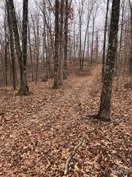 56 ACRES OF GOOD TIMBER, FOOD PLOT & SMALL CLEAR CUT