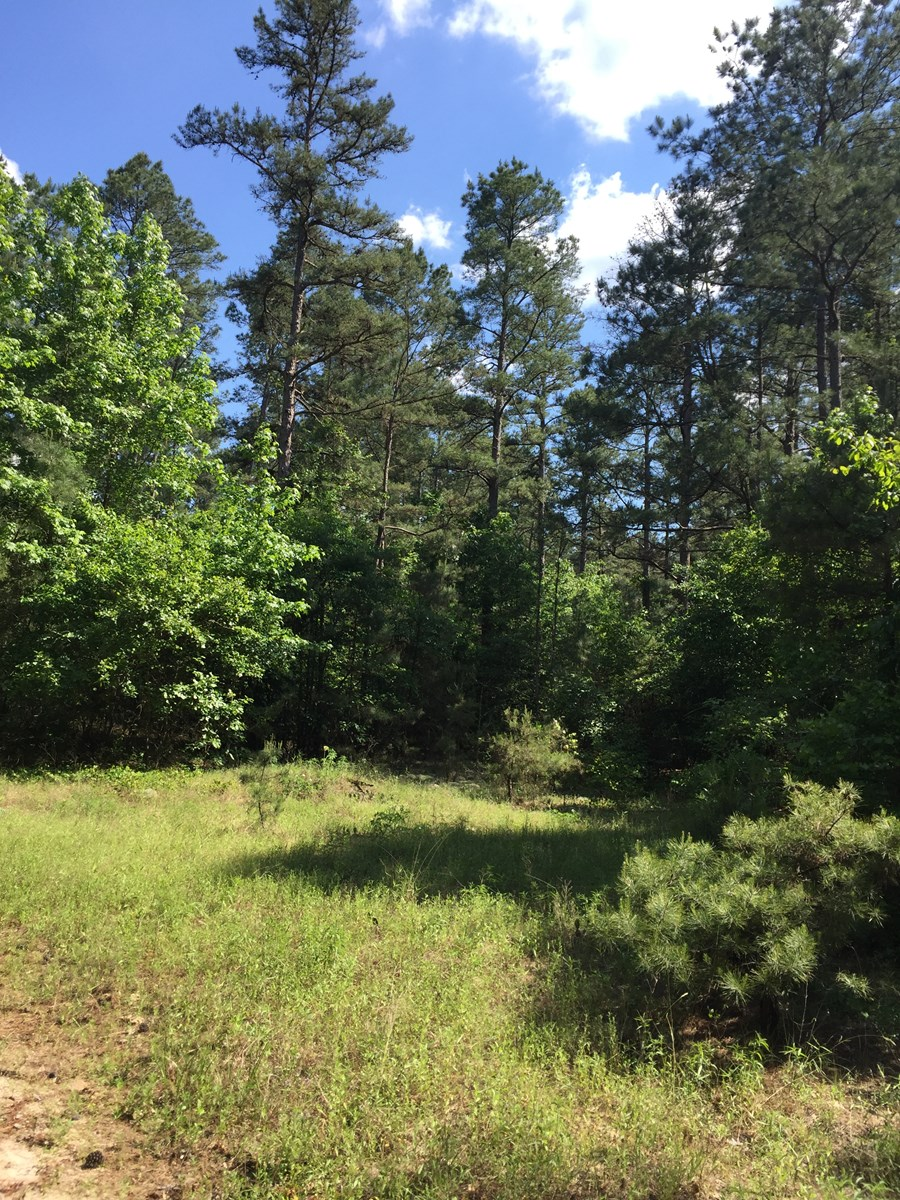 Pine Hunting Land near State Park for Sale in Ouachita Co.
