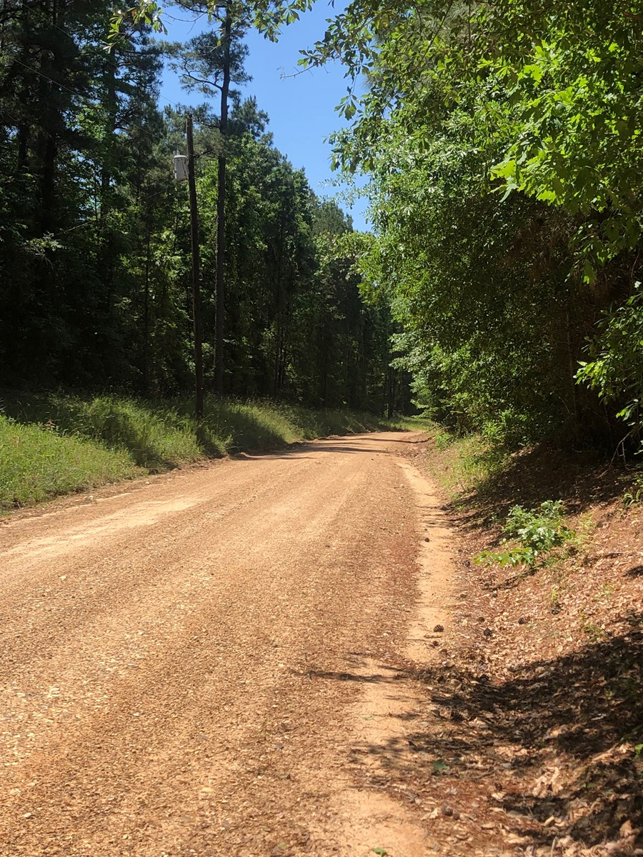Pine Timber Land on Public Road near Rosston, AR for Sale