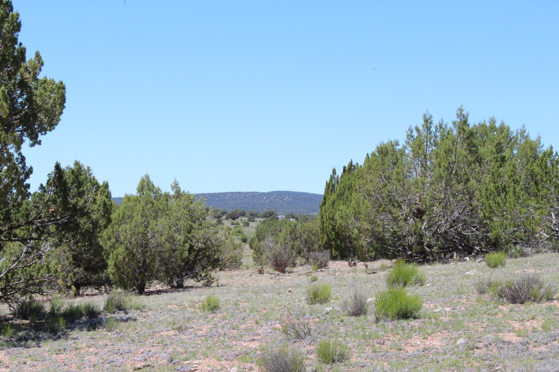 40 Acres with Good Access Great Views