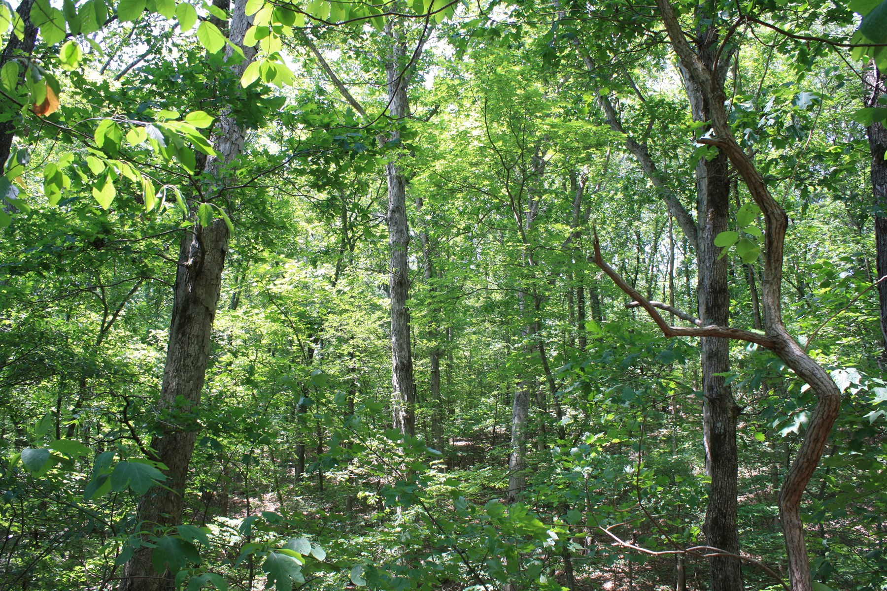 Southeast Missouri Timberland for sale