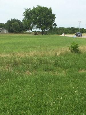 NORTHEAST TX ACREAGE FOR RECREATION, HUNTING & FARMING LAND