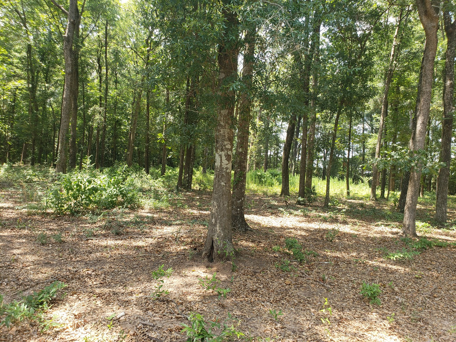 1.85 ACRE LOT ON COUNTY ROAD 55, HARTFORD, ALABAMA