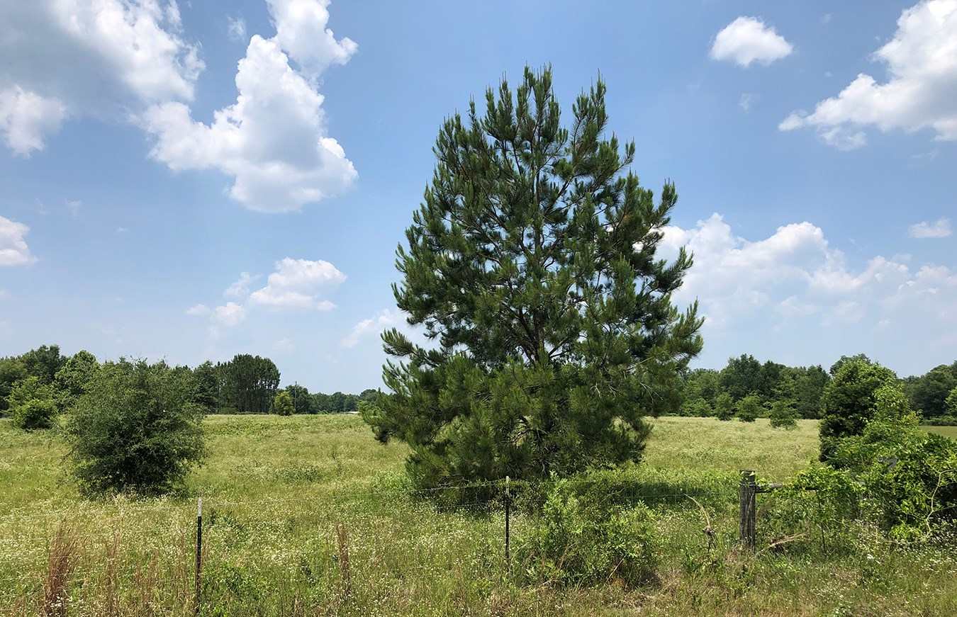 5 FULLY FENCED ACRES ON PAVED CUL-DE-SAC FOR SALE!