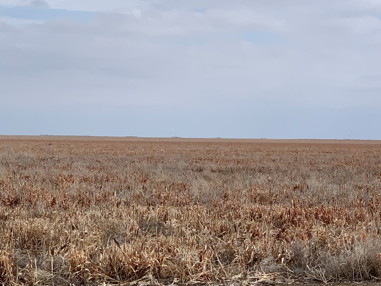 790+/- ACRES OF DRYLAND FOR SALE IN BACA COUNTY, COLORADO
