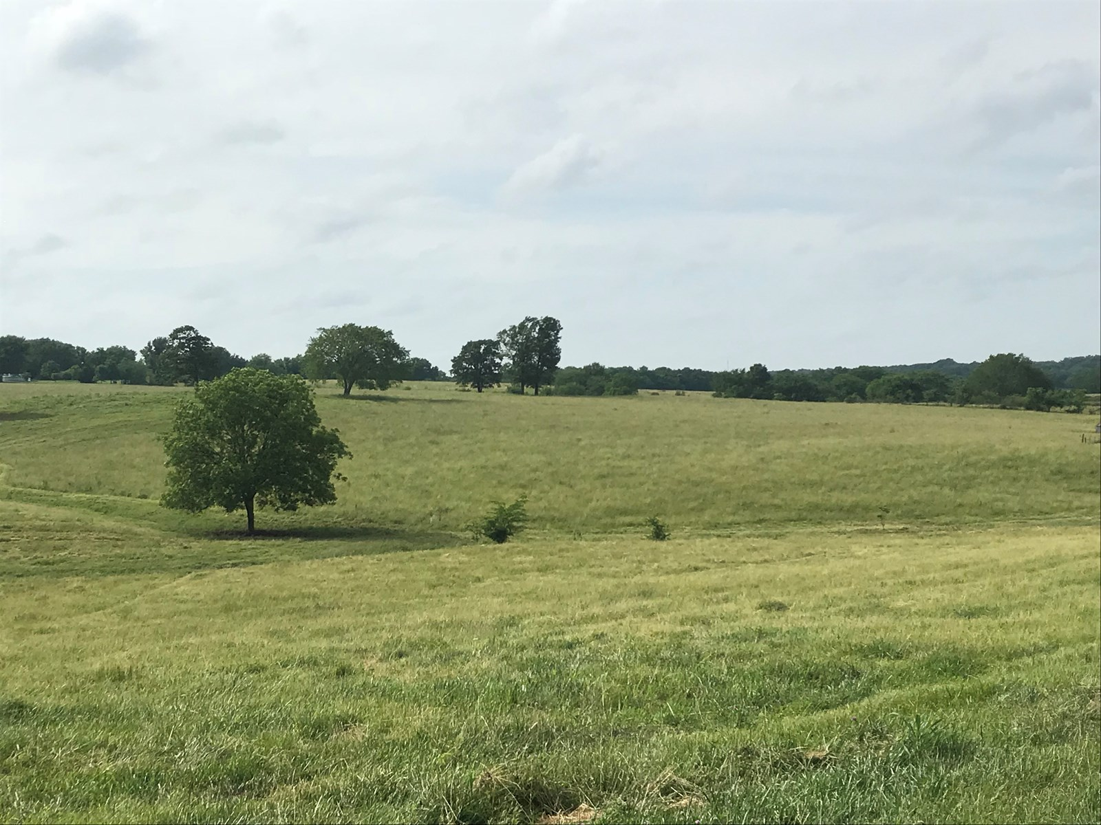 Cattle Pasture/ Beautiful Building Acreage For Sale!!!