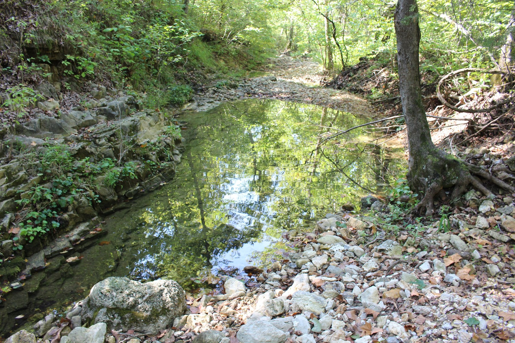170 acres Wooded Land For Sale With Live Creek